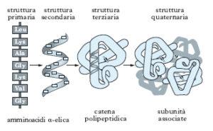 struttura proteine